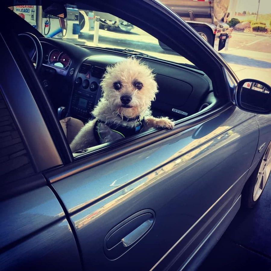 Ross' dog Chewy riding shotgun