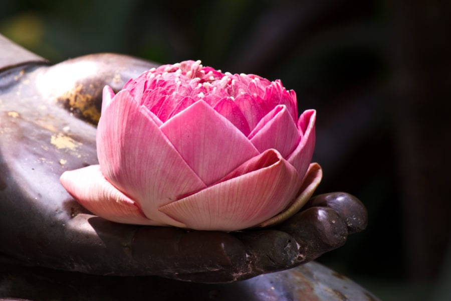A serene flower boasts zen in the work-life balance during COVID-19.